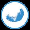 Duvet canard